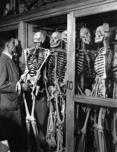 Ellertons Skeletons!